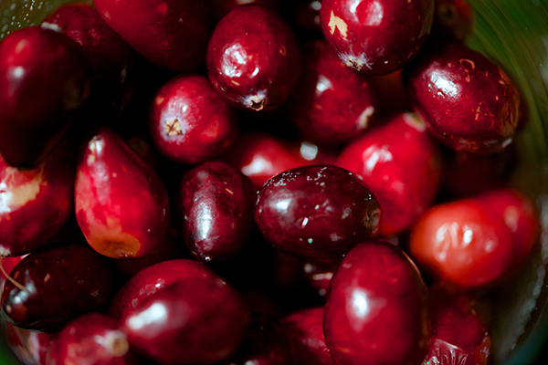 Cranberries from the grocery store were used to fill glass vases to bring freshness to the tablescape and for their vivid color.